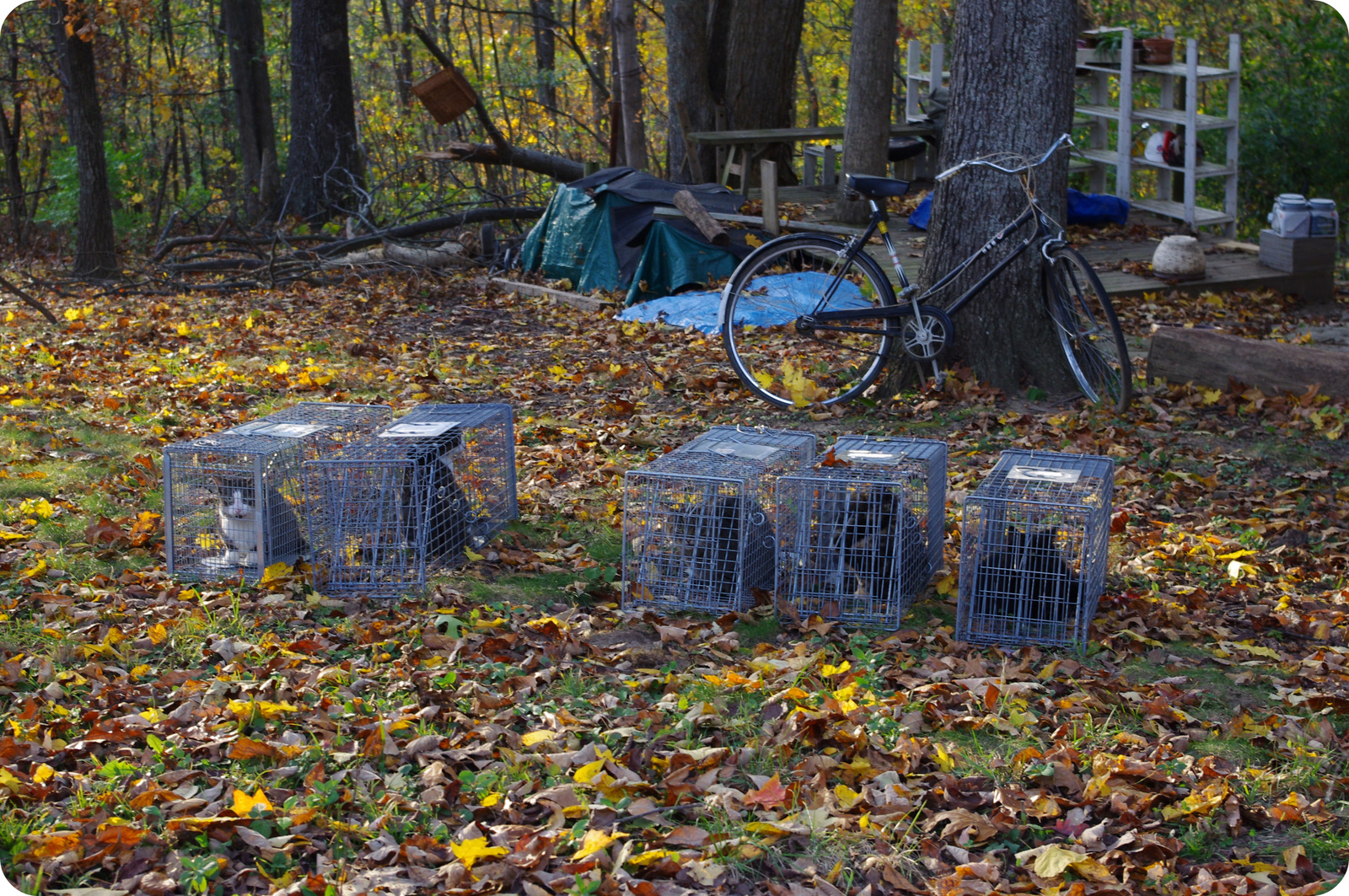 Ohio Alleycat Resource & Spay Neuter Clinic Trapping