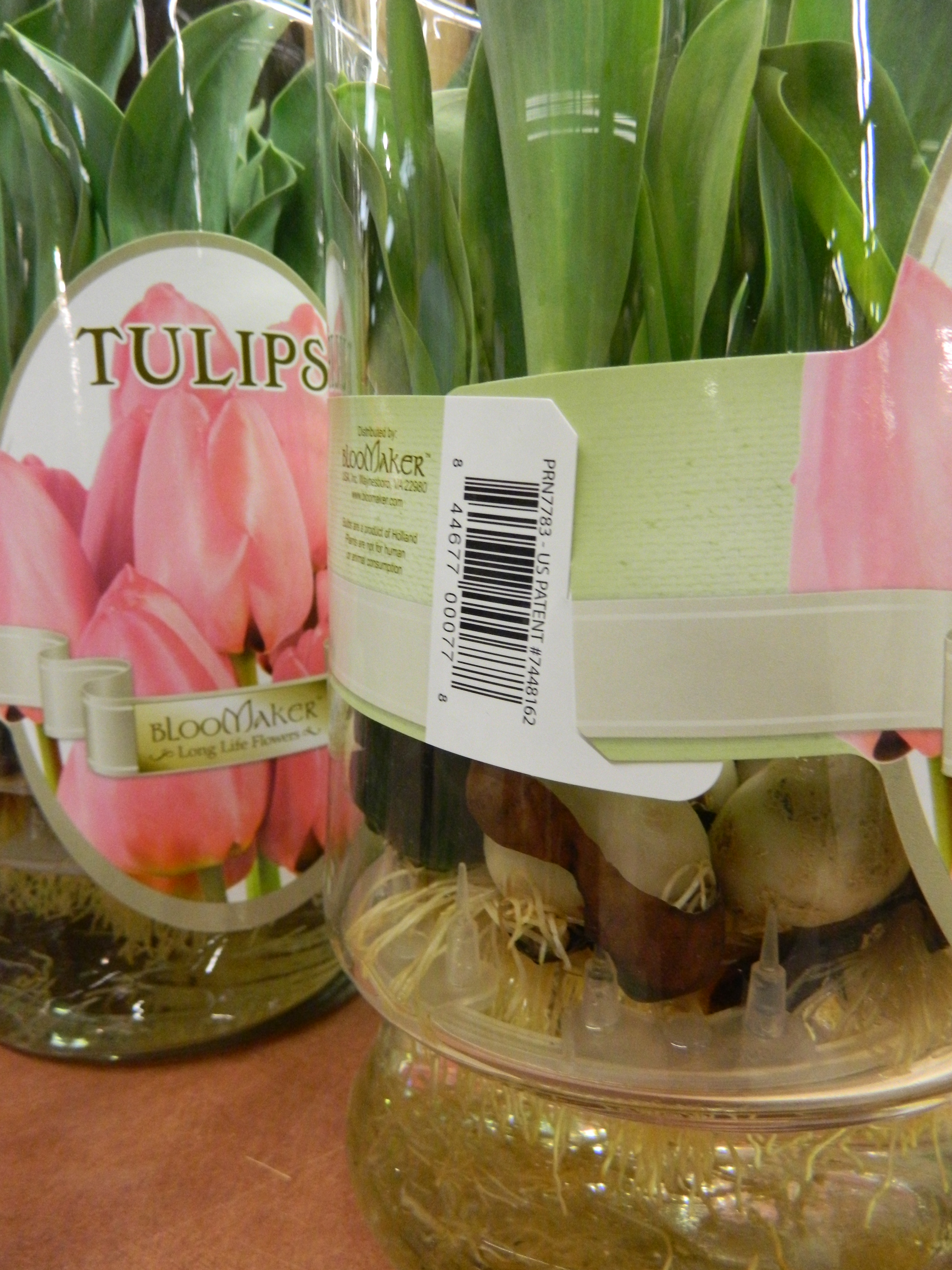 Kimberly l jackson new jersey gardens water grown tulips and kimberly l jackson new jersey gardens water grown tulips and hyacinths at wegmans stores reviewsmspy