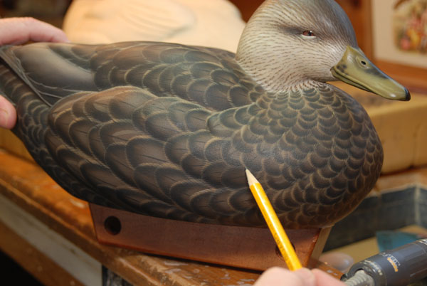 Drawing Feather Groups with Tommy Rogers - How-to Articles - IWCA