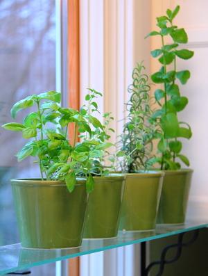 Kitchen Window Herb Garden Blog Homeandawaywithlisa