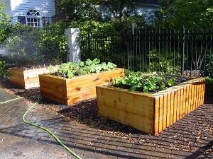 Microfarm Organic Gardens Blog Microfarm Organic Gardens
