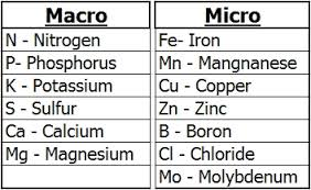 Macro & Micro Nutrients Chart