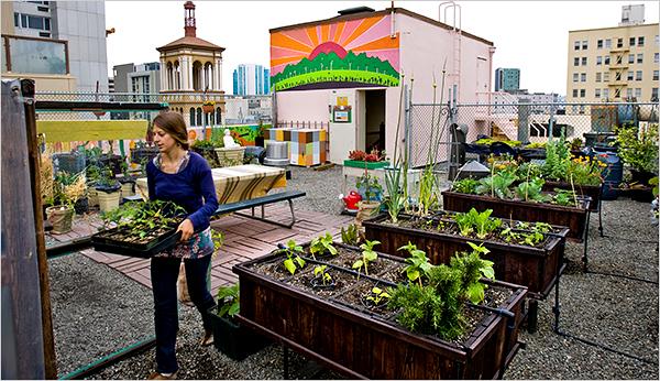 Rooftop Gardening rooftop gardening - microfarm organic gardens blog - microfarm