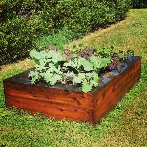 Simple Kitchen Garden