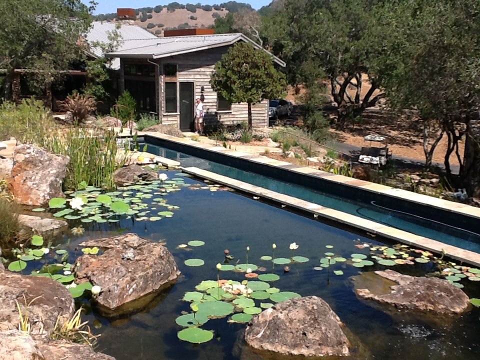 Nice Natural Swimming Pools And Pond Designs