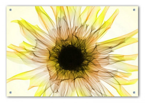 Cool Large Acrylic Wall Art Images - Wall Art Design ...