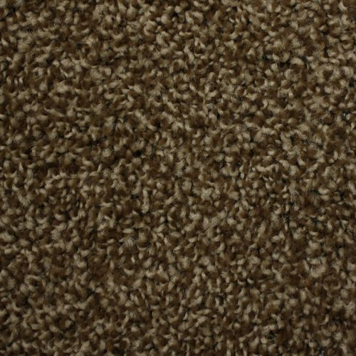 We Got You Covered Carpet Vinyl Plank Carpet