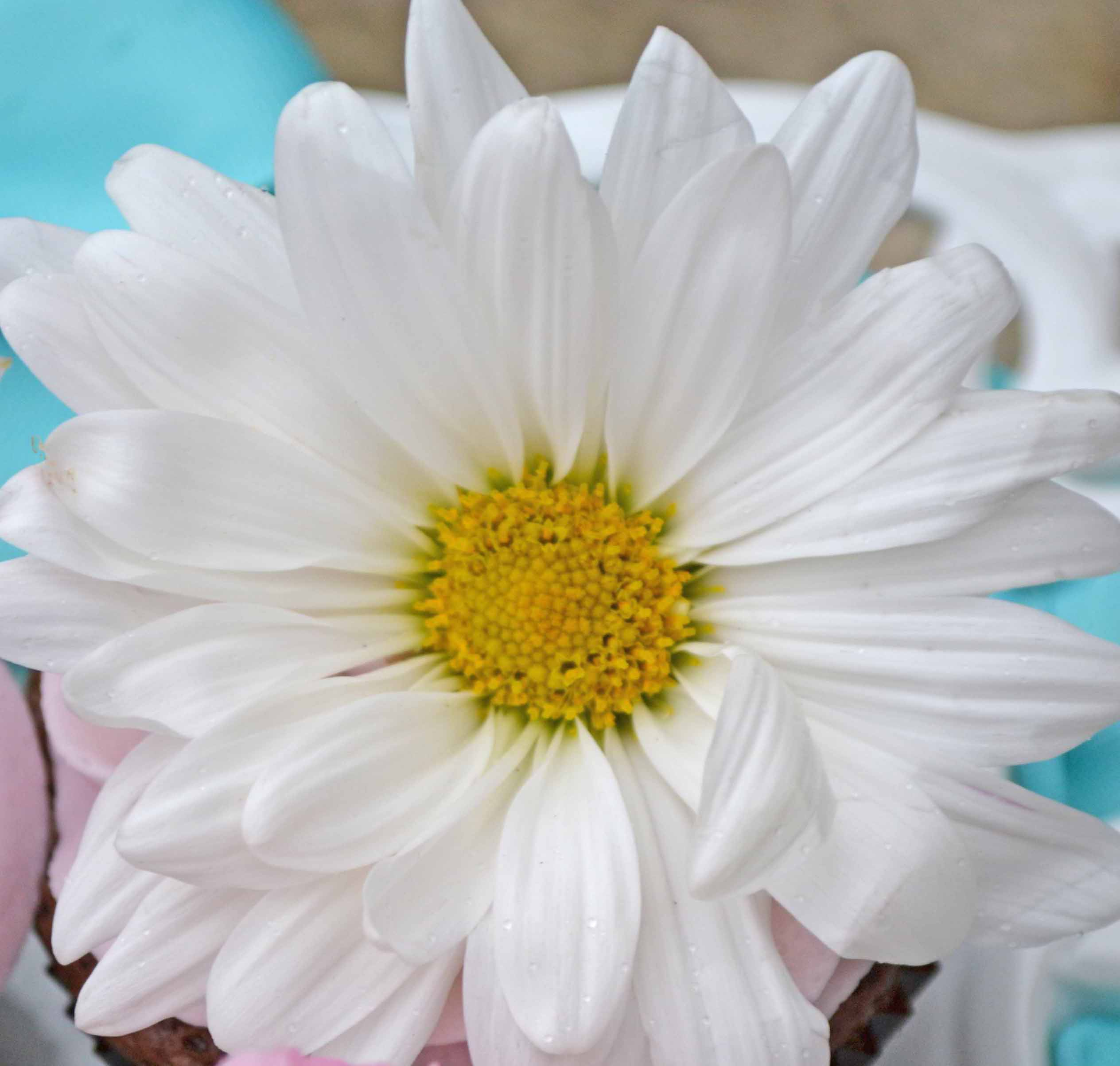 Sweetdesigncompany treats sweet design company edible flowers mightylinksfo