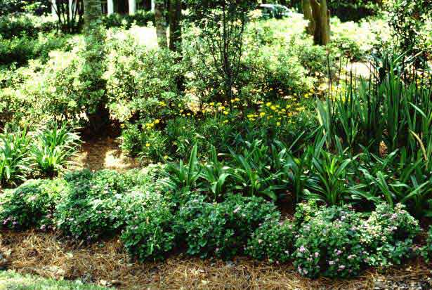 The Ideal Environmentally Sound Garden Has Native Plants And Shrubs That  Thrive In Your Local Climate. Native Plants Make The Most Of The Local  Environment ...