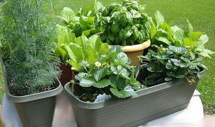 Herbs in a Container Garden GARDEN IDEAS AND DESIGN BLOG