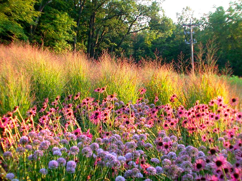 Introduce sensory elements into your garden with whispy for Piet oudolf planting schemes