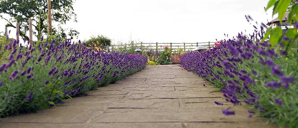 Garden border designs long garden design ideas garden for Garden design yorkshire