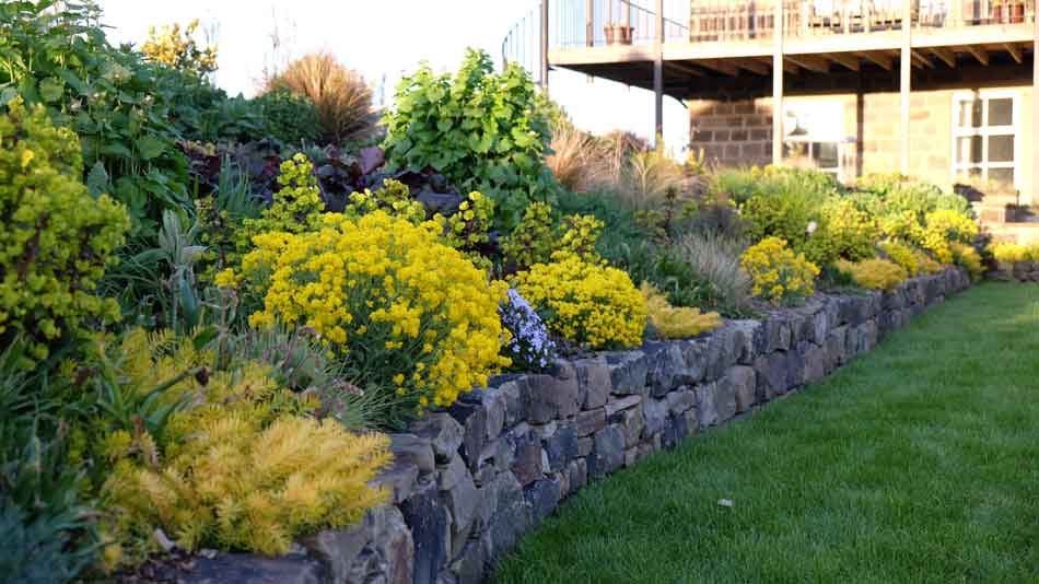 Garden Edging Ideas Garden Design In Shrewsbury Designer - shrub garden design uk