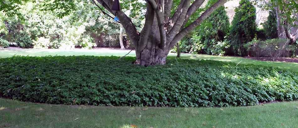 Low Maintenance Garden Design Ideas for Gardens Garden