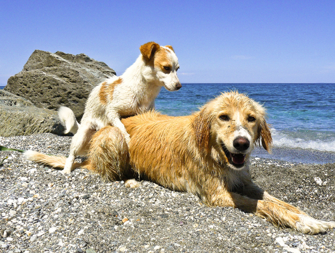 Dog neutering - pawspeliongreece