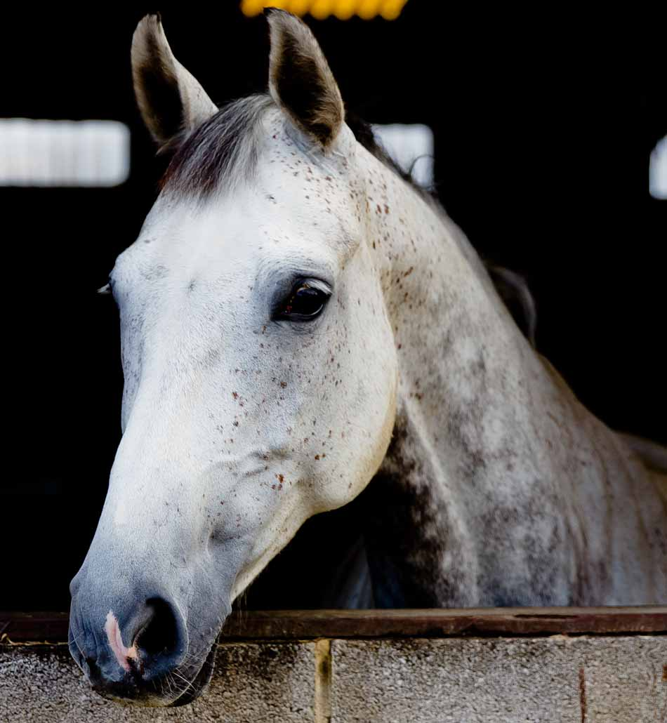 how to become an equine photographer
