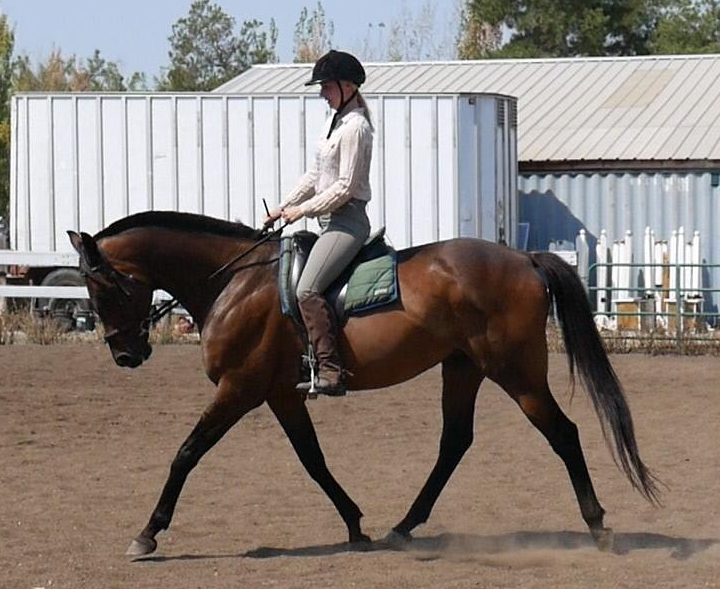 Handedness in Horses: How to Determine your Horse's Laterality