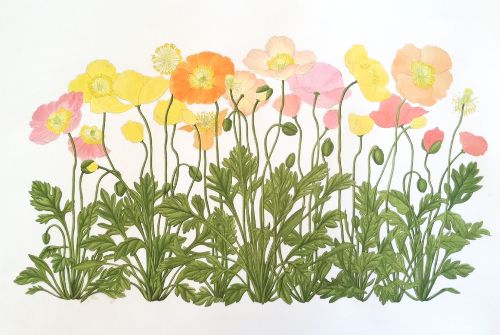 Eehunter works in progress iceland poppies part 3 right now the leaves still seem too monochromatic to me so after adding detail to the flowers ill come back and add colors to liven up the foliage mightylinksfo Choice Image