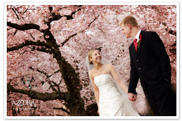 Seattle Wedding Photos at UW with cherry blossoms