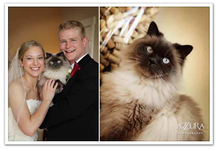 Wedding portrait with kitty cat