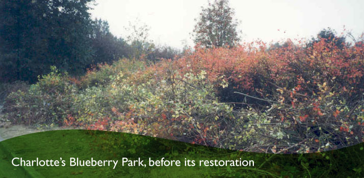 Charlotte's Blueberry Park before its restoration