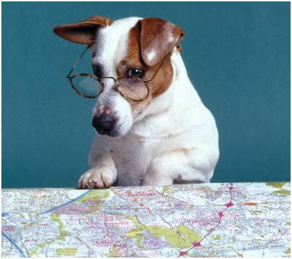 Image result for dog looking at map