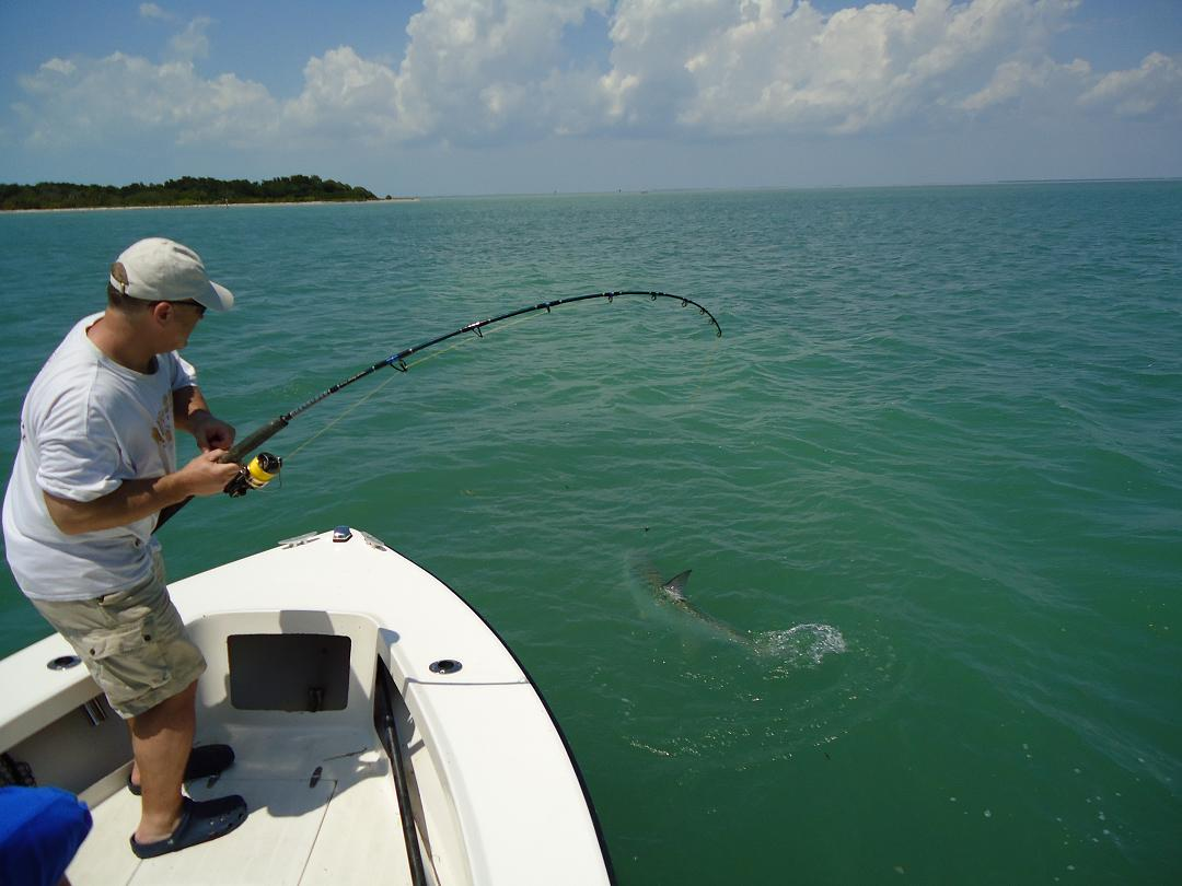 4 3 11 great islamorada tarpon fishing with greg olsen and for Islamorada tarpon fishing