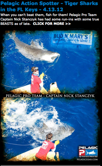 Feature with pelagic blog bud n 39 mary 39 s florida keys for Bud n mary s fishing report