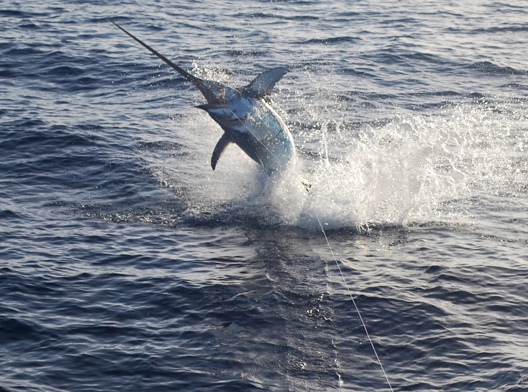 255 sword jumping blog bud n 39 mary 39 s florida keys for Bud and mary s fishing report