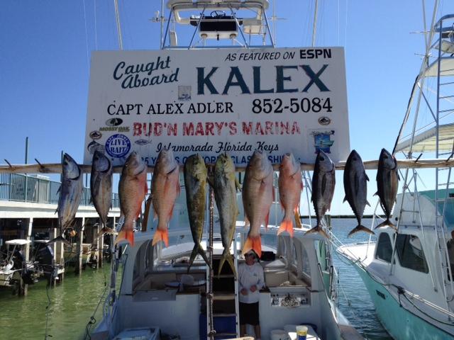 9 18 12 fishing in islamorada in september islamorada for Bud n mary s fishing report