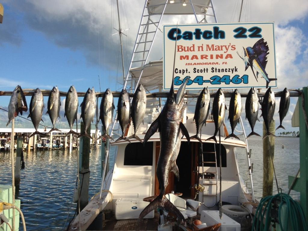 10 3 12 october islamorada fishing report islamorada for Bud n marys fishing report