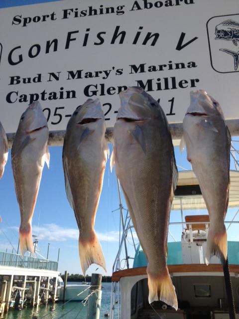 3 5 13 islamorada deep sea fishing islamorada fishing for Bud n marys fishing report