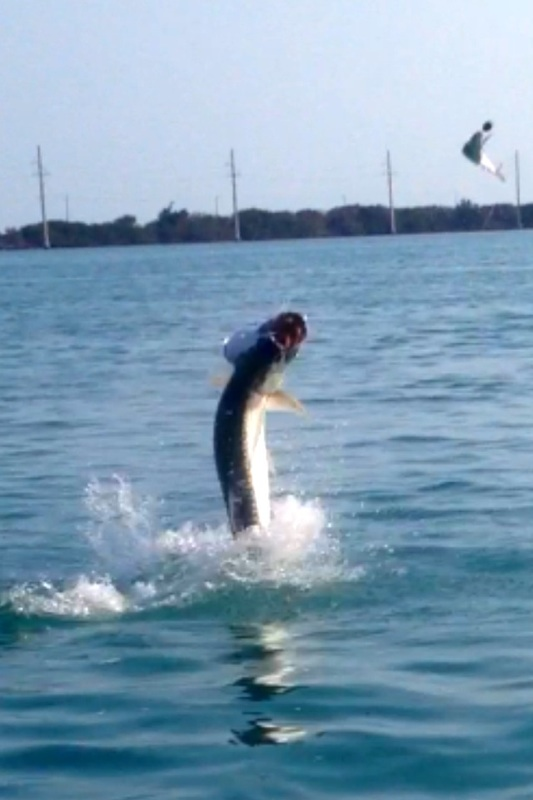 Islamorada tarpon fishing in april may florida big for Islamorada tarpon fishing