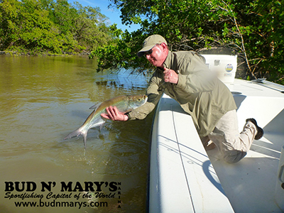 12 7 13 december everglades and gulf fishing report for Bud n mary s fishing report