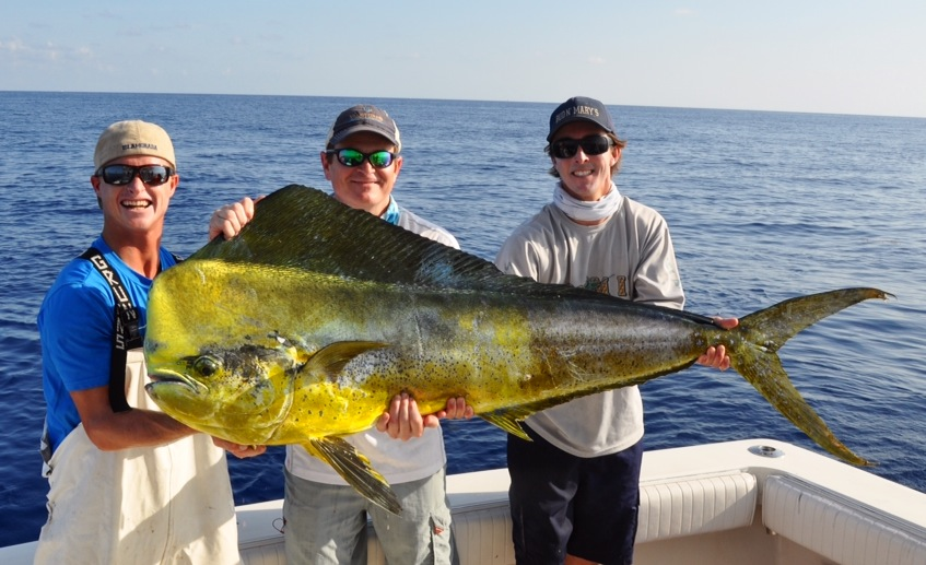 7 24 14 a few monster bull 39 s plus plenty of more mahi and for Bud and mary s fishing report