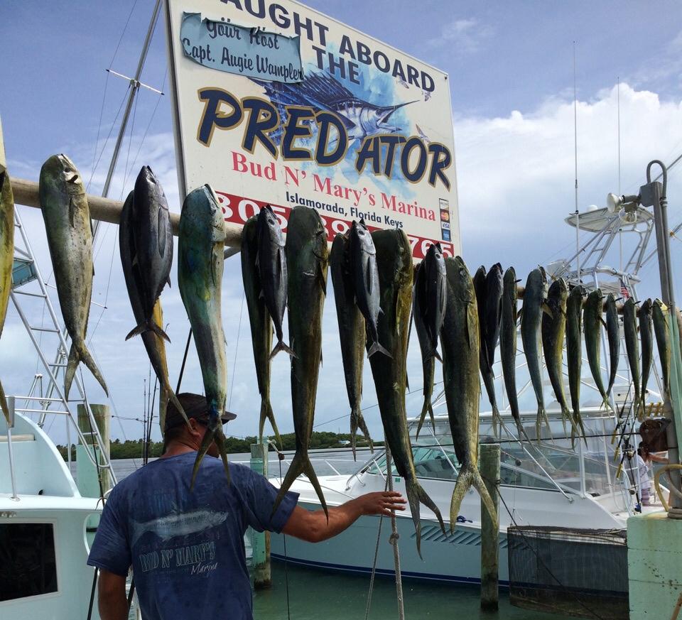 6 17 15 mid june offshore fishing report islamorada for Islamorada fishing guides