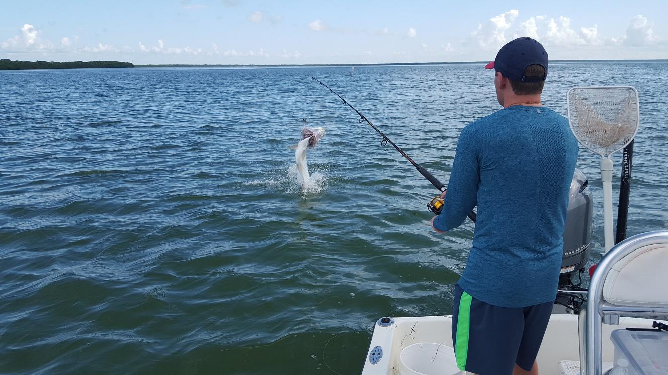 8 26 15 late august florida keys backcountry fishing for Florida keys fishing guides