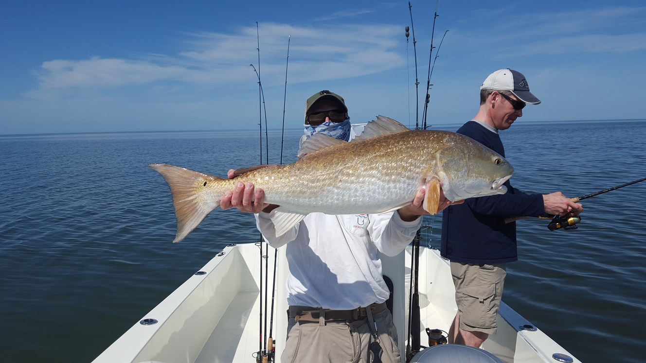 3 3 16 spring time backcountry fishing in islamorada for Florida keys fishing report