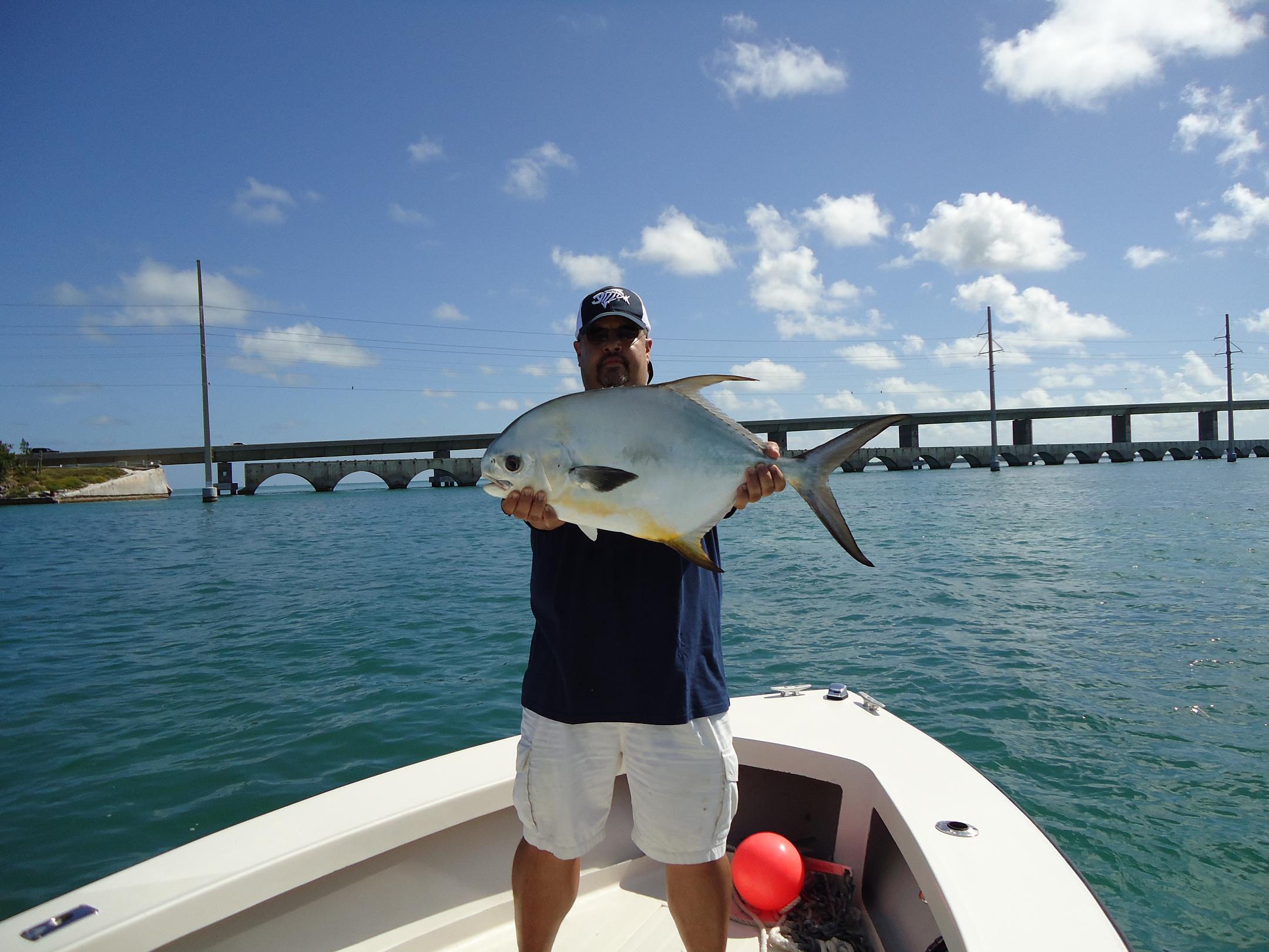 Some permits showing up around the bridges islamorada for Florida keys bridge fishing