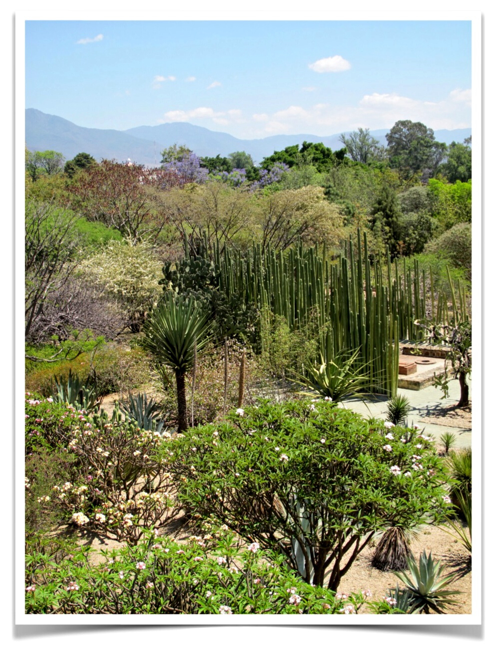 Thus i have seen home jardin etnobotanico oaxaca for Jardin oaxaca