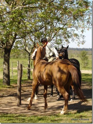 La Portena horses03