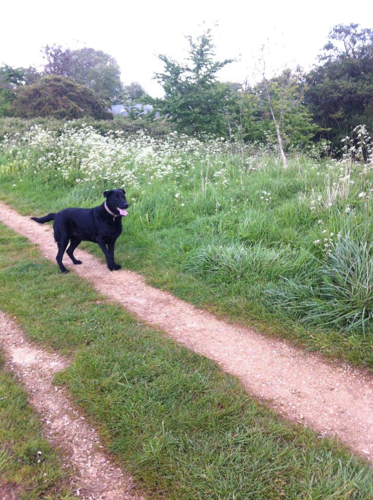 Dog Rescue Banbury