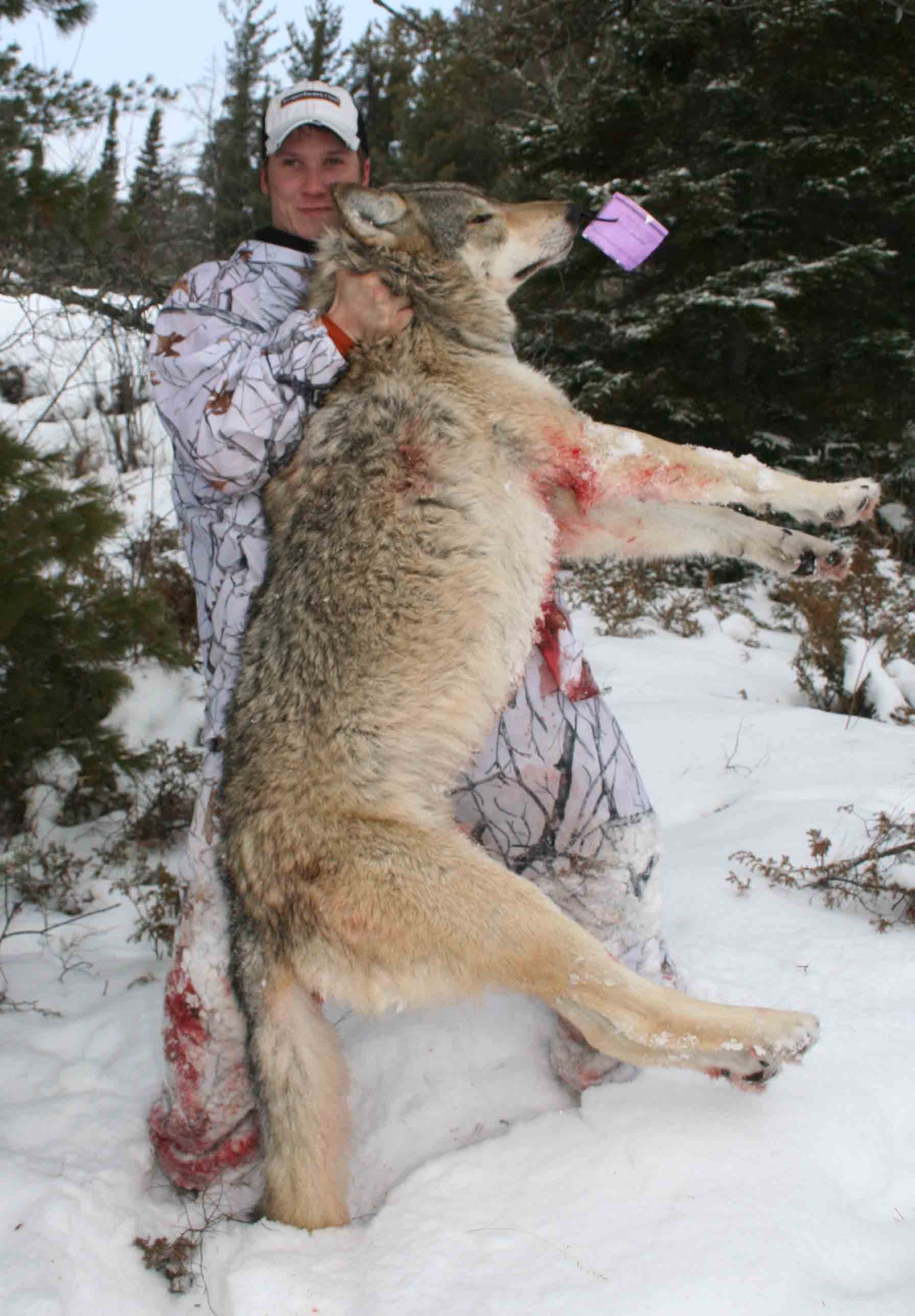 gustafson outdoors home what s going on successful wolf