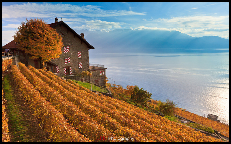 Lavaux Wallpaper Suisse Schweiz Switzerland 2560x1440 1920x1200 HD JHGphoto High Resolution Canon Lake Geneva Alps Vaud Vineyard Vignes UNESCO