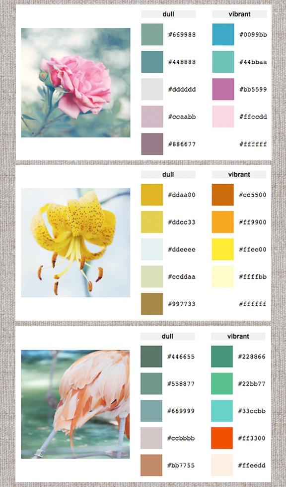 Web Help Color Palette Generator Home Creature Comforts