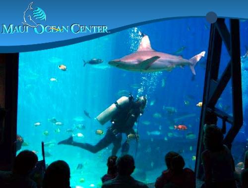 Image result for SHARK DIVE MAUI OCEAN CENTER