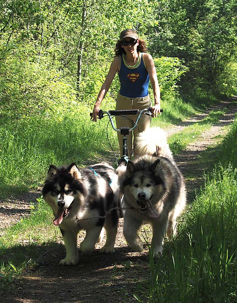 8?__SQUARESPACE_CACHEVERSION=1306896502009 ontario dog sports products canadian urban mush puppy (sledding