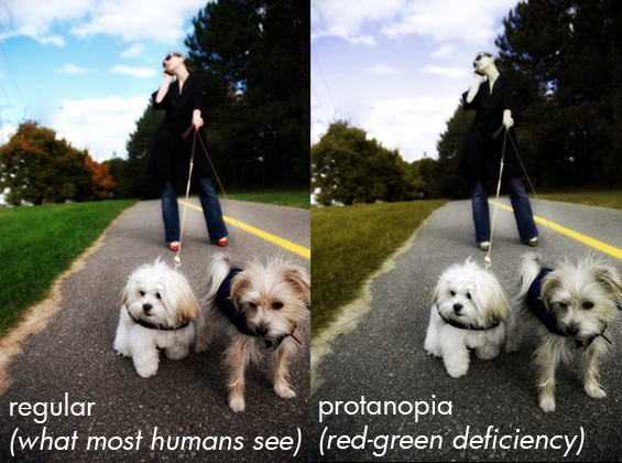 What Do Dogs See When They Look At Humans