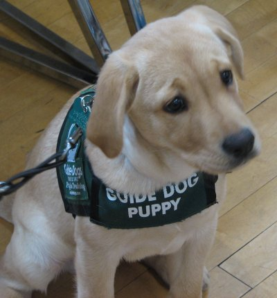 Guide Dog Puppy Training Manual