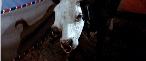 funhouse-two-headed-cow